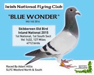 1st skibbob blue wonder