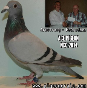 Ace Bird Winner 2014.