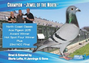 Champion-Jewel-Of-The-North-NCC-Ace-Pigeon-Award-Winner-On-Offer-At-The-Winter-Fayre