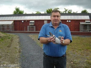 "Phil Boal holding his Ace Pigeon ""Bijou"". NIPA Champion Old Bird 2013. RPRA (Irish Region) 0-250 Miles winner."